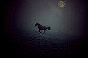 Arabian Horses Prints - By The Moon Print by Emily Stauring