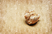 Seashell Mixed Media - By The Sea Painterly by Andee Photography