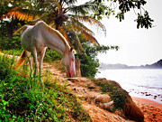 Tayrona Prints - Caballo Blanco Print by Skip Hunt