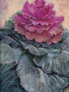 Flora Pastels Framed Prints - Cabbage Rose Framed Print by Debbie Harding