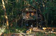 Cabin Fever Watercolor Print by Joseph G Holland