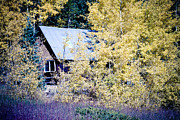 Fall Photographs Framed Prints - Cabin Hideaway Framed Print by James Bo Insogna
