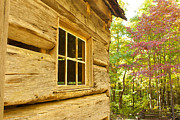 Cabin Window Framed Prints - Cabin View Framed Print by Lena Auxier
