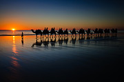 Jan Fijolek - Cable Beach Camels