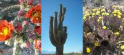 Lisa Bentley Art - Cacti Blooming Collage by Lisa Bentley