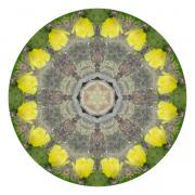 The Nature Center Digital Art - Cactus - Nature Mandala 1 by Laila Kujala