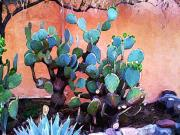 Charlie Spear Prints - Cactus and Adobe Print by Charlie Spear