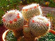 Amy Vangsgard - Cactus Buds