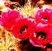 Prickly Rose Framed Prints - Cactus Flowers Framed Print by Shere Crossman