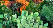 Red Rocks Framed Prints - Cactus Garden Framed Print by Ellen Lacey