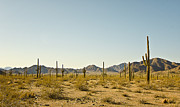 An  Pham - Cactus Landscape