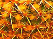 Abstract Flower Art - Cactus Patern by Amy Vangsgard