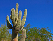 Arizonia Photos - Cactus by Wayne Stabnaw