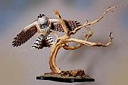 Desert Sculptures - Cactus Wren by Daniel McQuestion