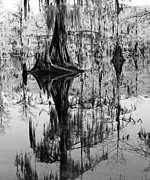 Black_and_white Posters - Caddo Lake 4 Poster by Gayle Johnson