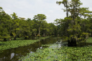 Big Cypress Bayou Photos - Caddo Lake Bayou 2 by Paul Anderson