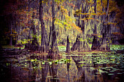 Lake Reflection Framed Prints - Caddo Lake Framed Print by Iris Greenwell