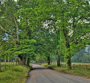 Country Lanes Photo Posters - Cades Cove - Scenic Sparks Lane Poster by Thomas Schoeller