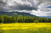 Gatlinburg Photo Prints - Cades Cove Great Smoky Mountains National Park TN - Fields of Gold Print by Dave Allen