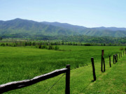 Gatlinburg Tennessee Photos - Cades Cove View by Nancy Mueller