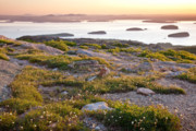 Wild And Scenic Prints - Cadillac Mountain View Print by Susan Cole Kelly