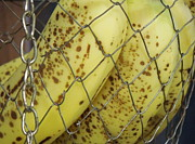 Banana Art Prints - Caged Bananas Print by Renee Trenholm