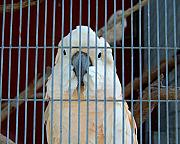 Cockatoo Metal Prints - Caged Metal Print by Jai Johnson