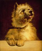 Eyes  Paintings - Cairn Terrier   by George Earl