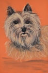 Christine Crosby - Cairn Terrier