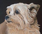 Sharon Lamb - Cairn Terrier