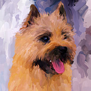 Cairn Terrier Posters - Cairn Terrier Square Poster by Jai Johnson