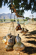 Tied Metal Prints - Calabash gourd bottles in Mexico Metal Print by Elena Elisseeva