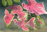 Leona Jones Posters - Caladiums with Chameleon Poster by Leona Jones