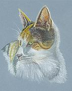 Kitten Prints Pastels Framed Prints - Calico Callie Framed Print by Carol Wisniewski
