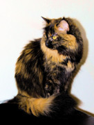 Photos Of Cats Photos - Calico Cats by Cheryl Poland