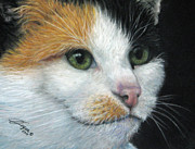 Cat Portraits Pastels Prints - Calico Dreams Print by Beverly Fuqua