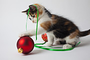 Ribbon Framed Prints - Calico kitten and Christmas ornaments Framed Print by Garry Gay