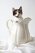 Whiskers Posters - Calico kitten in white pitcher Poster by Garry Gay