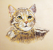Fauna Pastels Metal Prints - Calico Kitten Metal Print by Jim Barber Hove