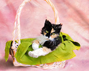Calico Framed Prints - Calico Kitty in Basket Framed Print by Jai Johnson