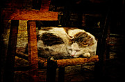 Sleeping Cat Prints - Calico Print by Lois Bryan