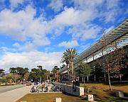 Golden Gate Park Photos - California Academy of Sciences by Wingsdomain Art and Photography