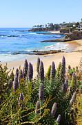 Paul Velgos - California Coast Flowers Photo