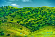 Green Day Art - California Coast Spring Hillside by Larry Gerbrandt