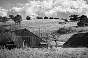 Ranch Prints - California Farmland - Black and White Print by Peter Tellone