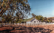 Cindy Nunn Art - California Homesteading by Cindy Nunn