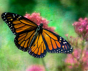 Chris Lord - California Monarch