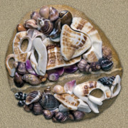 Shells Mixed Media - California Opus 03 by Carol Zee