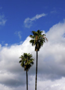 Sky Scape Art - California Palm Trees by Jera Sky