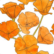 Poppies Drawings Posters - California Poppies Poster by Dena McMurdie